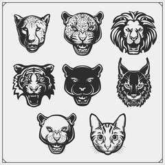 Vector emblems with bobcat, lion, panther, cat, cheetah, cougar and leopard for a sport club. Design for t-shirt.