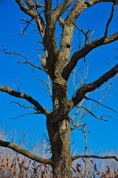 Halloween Tree. - Lynching Dark Metaphor.