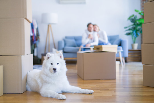 Young beautiful couple with dog sitting on the sofa at new home around cardboard boxes