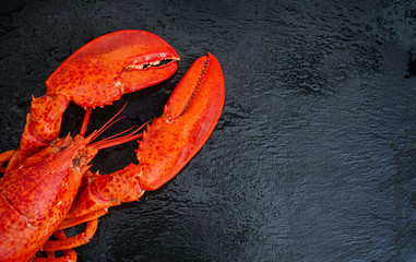 Steamed lobster seafood on black background