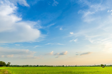 Wall Murals Blue Beautiful green cornfield with land air atmosphere blue bright and orange yellow dramatic sunset sky in countryside texture background.