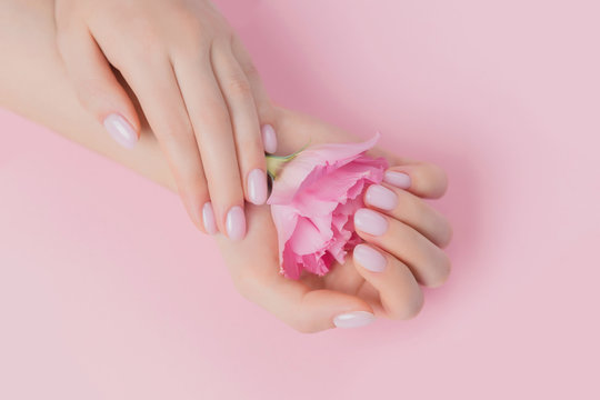 Solid manicure on girl nails with gel polish, hands holding flower on pink background. Concept natural organic skin care