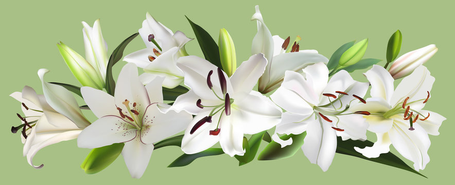 isolated on green white large lily flowers stripe