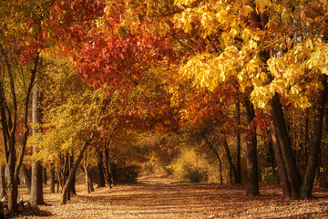 Garden Poster Colorful road in the forest an autumns day