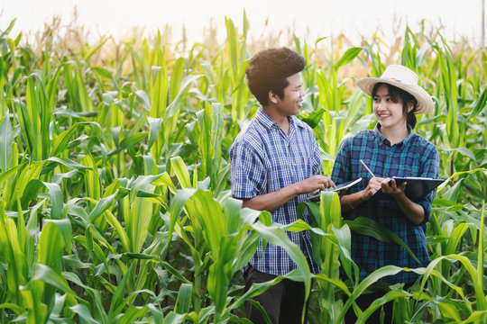 Agriculture Young men and women smart farmers inspecting plant organic corn field
