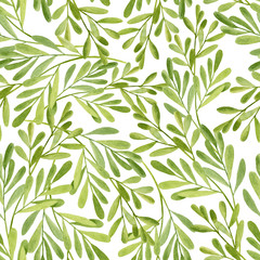 Watercolor tea tree leaves seamless pattern. Hand drawn illustration of Melaleuca. Green medicinal plant isolated on white background. Herbs for cosmetics, package, textile, cards, decoration