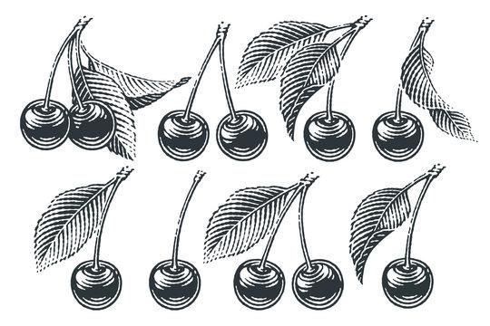 Cherry set. Hand drawn engraving style illustrations.