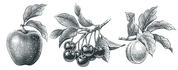 Apple, cherry and apricot set. Hand drawn engraving style illustrations.