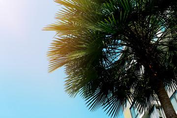Wall Mural - big green palm, blue sky and sunshine