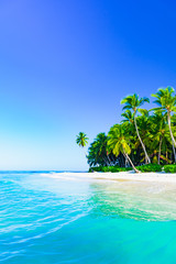 beautiful caribbean landscape with palm tree on the beach