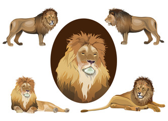 Lion set vector images in realistic style