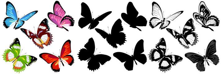 butterfly368