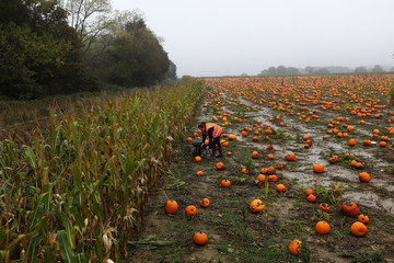 Emily French stacks pumpkins onto a wheel barrow at the Colchester Pumpkin Patch in Aldham