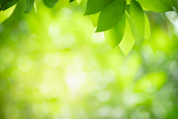 Beautiful nature view of green leaf on blurred greenery background in garden with copy space using as background natural green plants landscape, ecology, fresh wallpaper concept.
