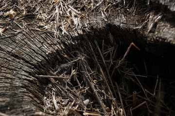 From above old stump of felled tree with dry cracked surface in forest