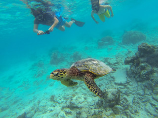 Boy snorkeling takes pictures of sea turtle (marine turtles)