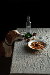 Dog looking food on table