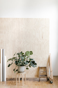 leafy green potted plant in modern photo studio with plywood backdrop