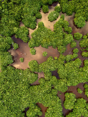 Mangrove forest from above