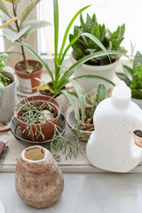 different types of plants are on the windowsill