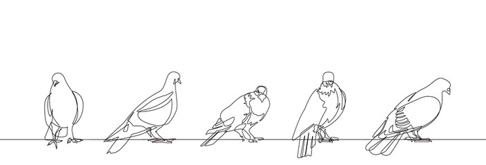 Pigeon One Continuous Line Vector Illustration Set of Five