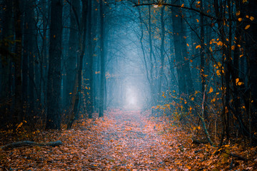 Foto op Aluminium Weg in bos Mysterious pathway. Footpath in the beautiful, foggy, autumn, mysterious forest, among high trees with yellow leaves.