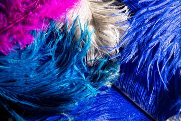 Photo sur Toile Les Textures colorful feathers on a black background