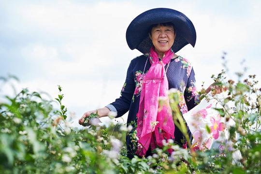 Asian seniors picking flowers in natural fields