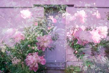 Pink flowers surrounding french door