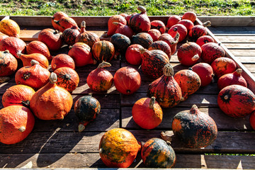 Selection of pumpkins on market stand