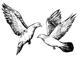 Set of vintage style vector illustration. Beautiful flying pigeons. Hand drawn graphic picture. Digital sketches of animals and bird. Design element for poster, print, postcard, t-shirt etc.