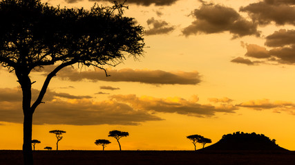 Wall Mural - African Acacia Tree Sunset Scene Background
