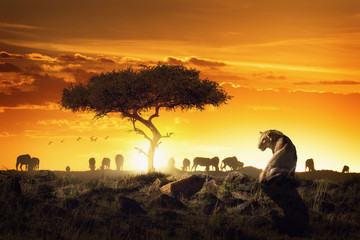 African Safari Sunset Scene With Lioness