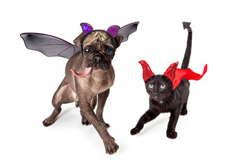 Cat and Dog Dressed for Halloween