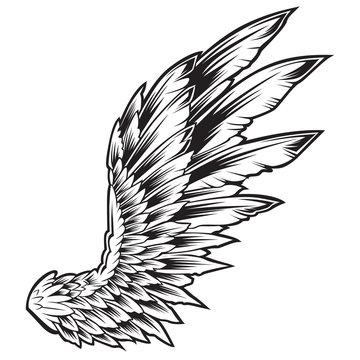 Wings Bird Black & White Vector Illustrator 222