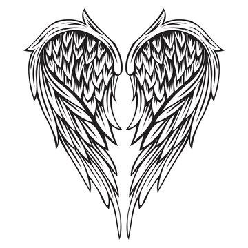 Wings Bird Black & White Vector Illustrator 555