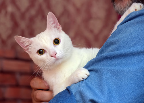 cute white albino cat