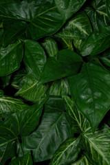 緑アート植物