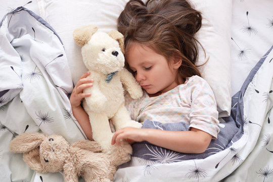 Close up portrait of beautiful cute little girl sleeping peacefully and hugging her stuffed toys in bed, charming kid with closed eyes, dark haired child relaxing at home in morning. Childhood concept