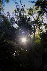 sun blast through tree branches