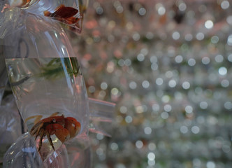 Tropical fish and crabs in plastic bags on display for sale in Hong Kong