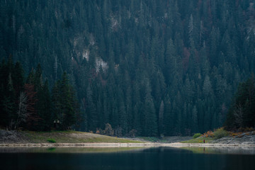 Mountain lake with coniferous forest in National Park Durmitor, Montenegro, Europe.
