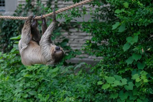Sloth animal at Buffalo Zoo