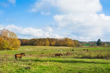 konie na łące, piękny jesienny krajobraz