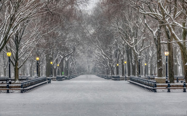 Wall Murals Pale violet Central Park in winter