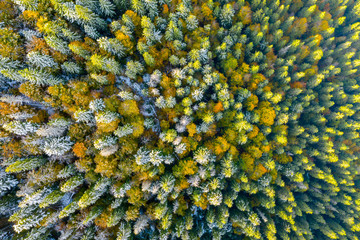 Golden autumn drone view of forest landscape with yellow trees from above