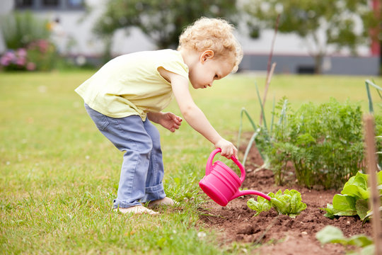 Little girl standing in the garden watering lettuce