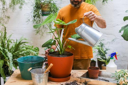 Man watering green plant (Monstera Deliciosa)