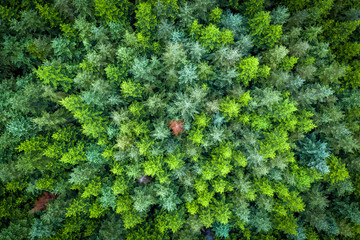 Green pine forest from above, Vancouver Island, Canada