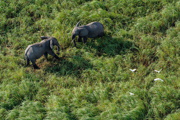 aerial view of elephants facing each other, standing in the savannah